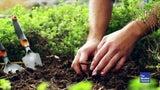 Gärtnern für Anfänger: Diese Tipps erleichtern Ihnen die Arbeit