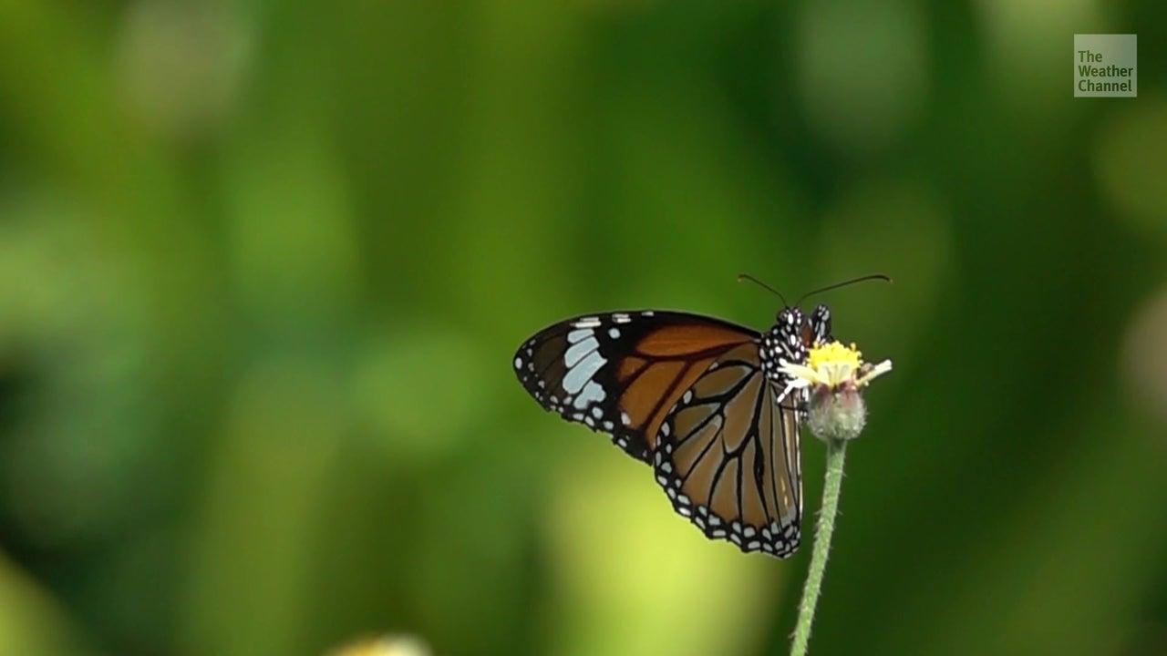 Forscher schlagen Alarm: Insekten könnten in 100 Jahren ausgestorben sein