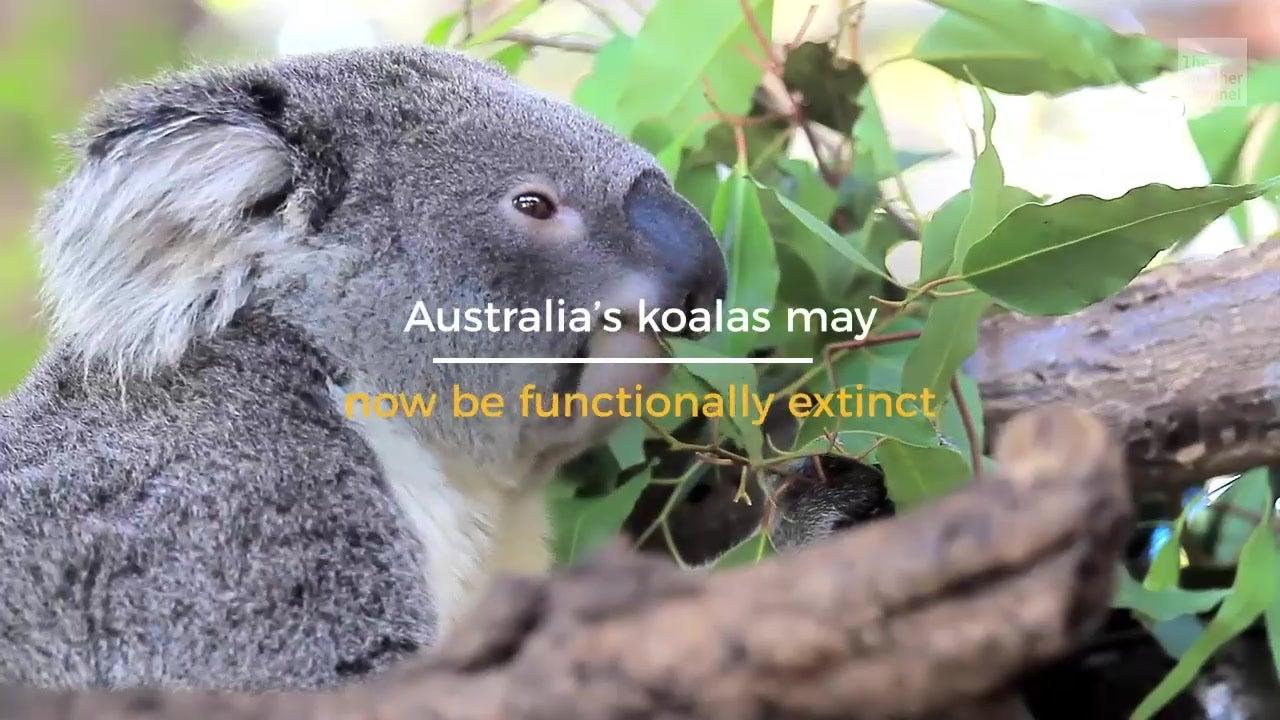 One of Australia's most recognized symbols is in peril.