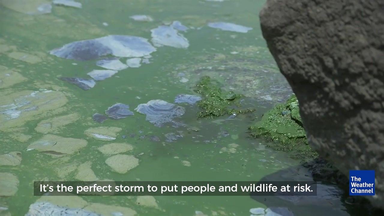 Lake Erie's Algae Problem