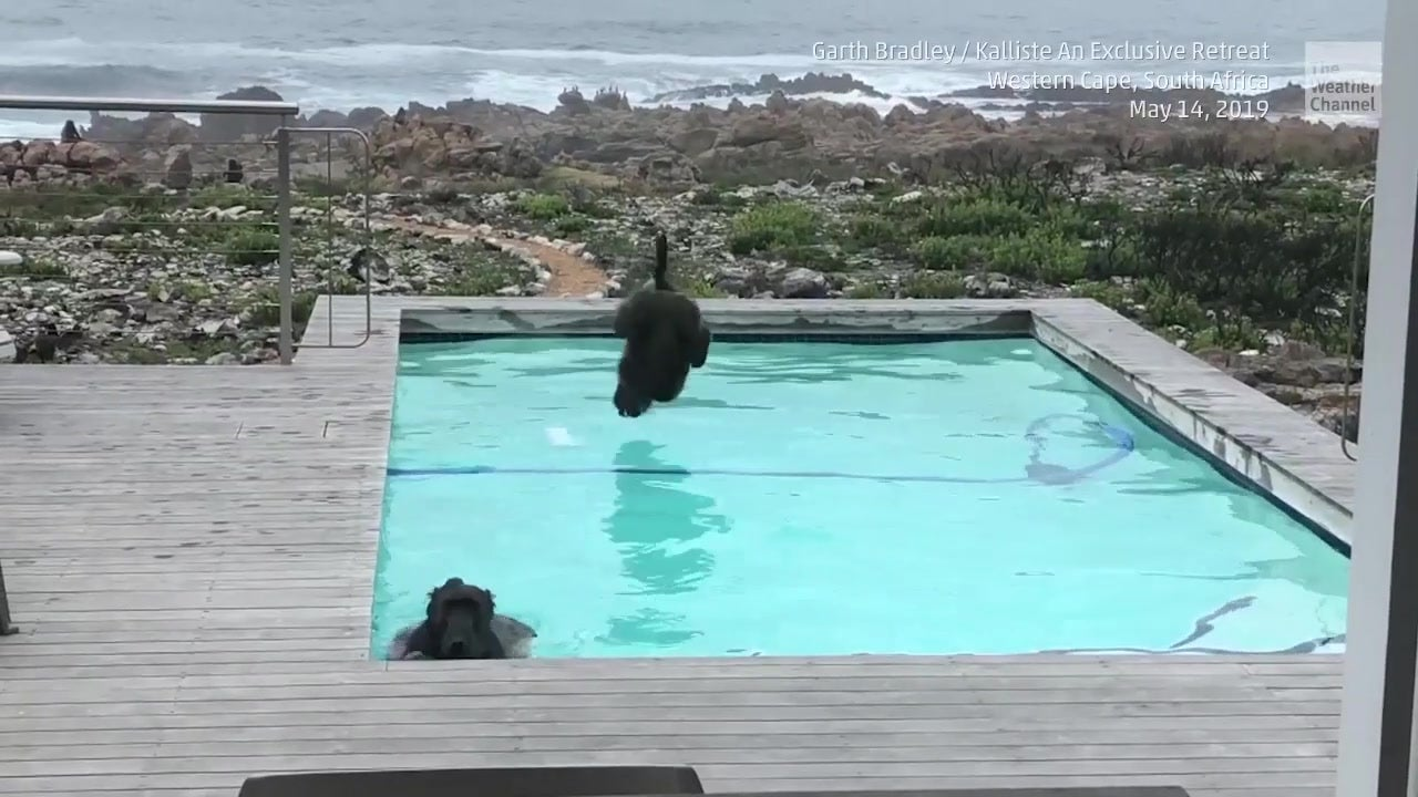 This Monkey Business Will Make Your Day