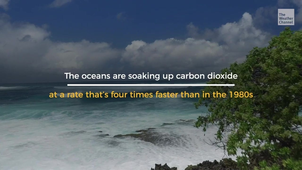 Ocean 'Sink' Soaks Up Billions of Tons of CO2