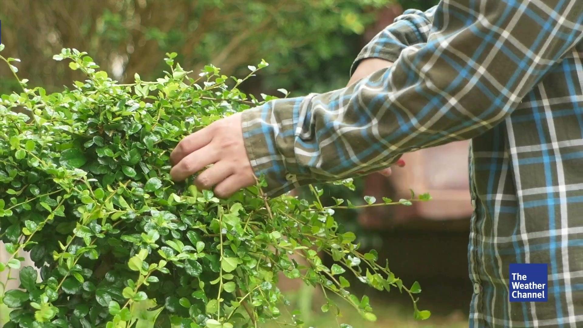 Pflanzenwelt erwacht: Das sollten Hobby-Gärtner jetzt erledigen