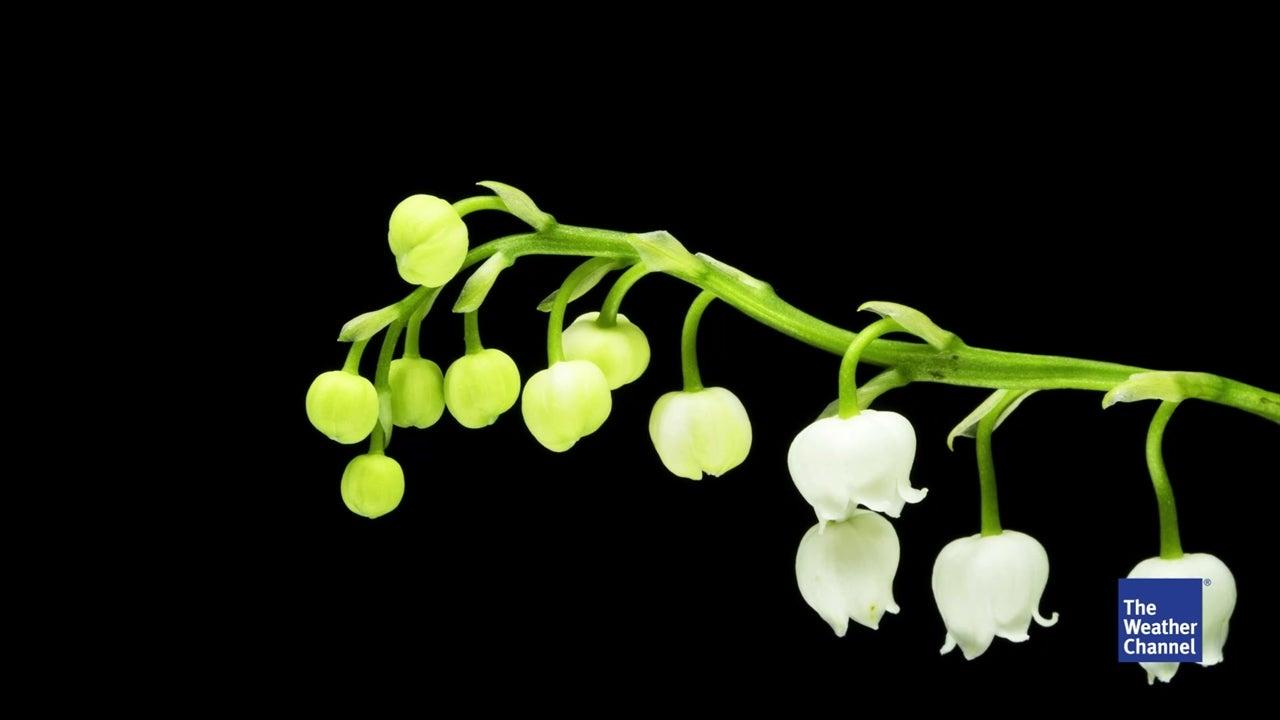 Besondere Gefahr für Kinder: Sieben Pflanzen, die tödlich sein können