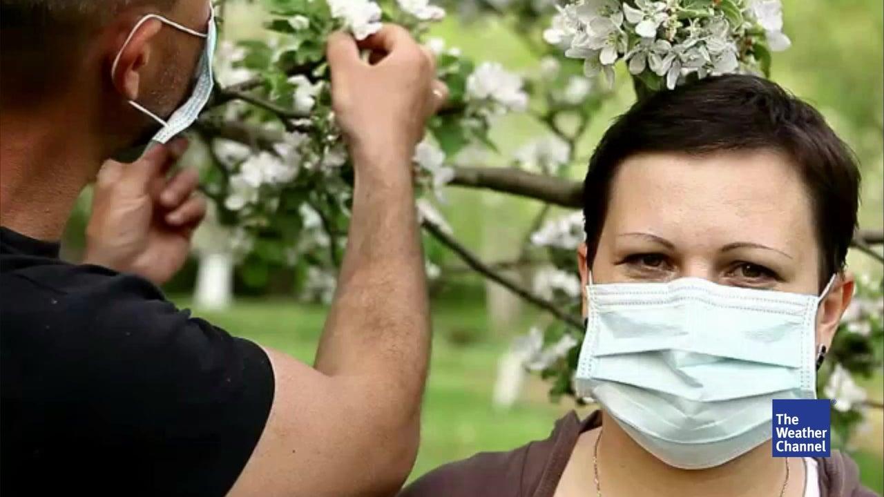Forscher warnen: Städten droht Pollen-Kollaps