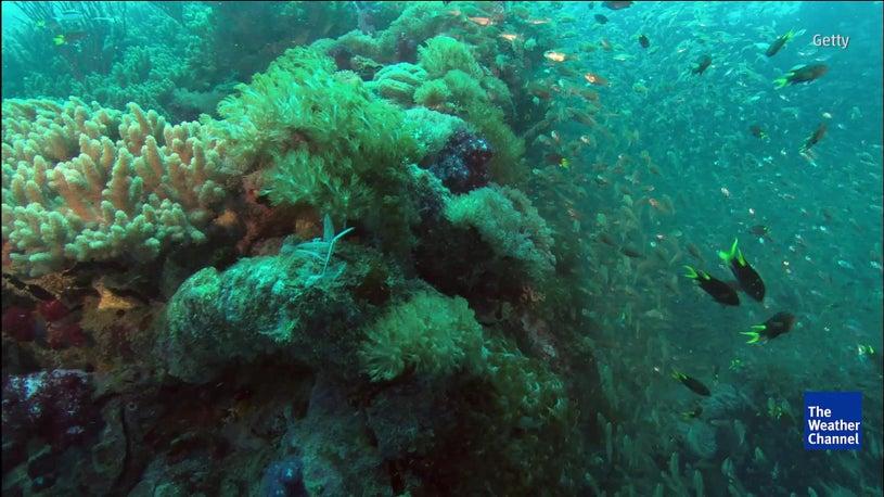 Great Barrier Reef Not in Danger?