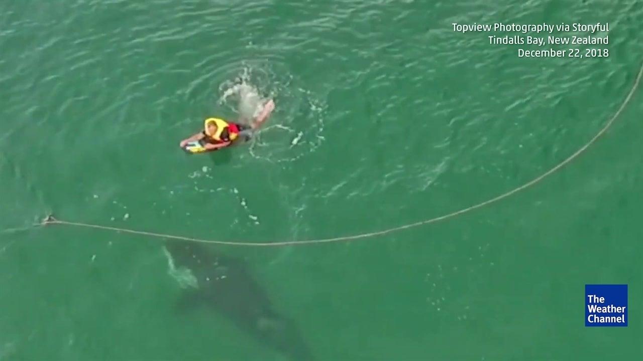 Surfista tem encontro com orca