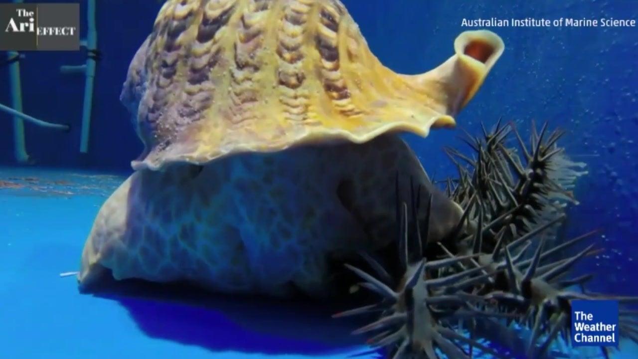 Todeskampf ums Great Barrier Reef