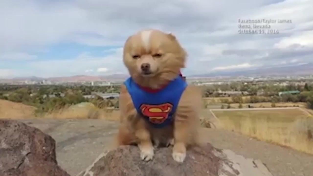 Aufgepasst! Hier kommt Superdog