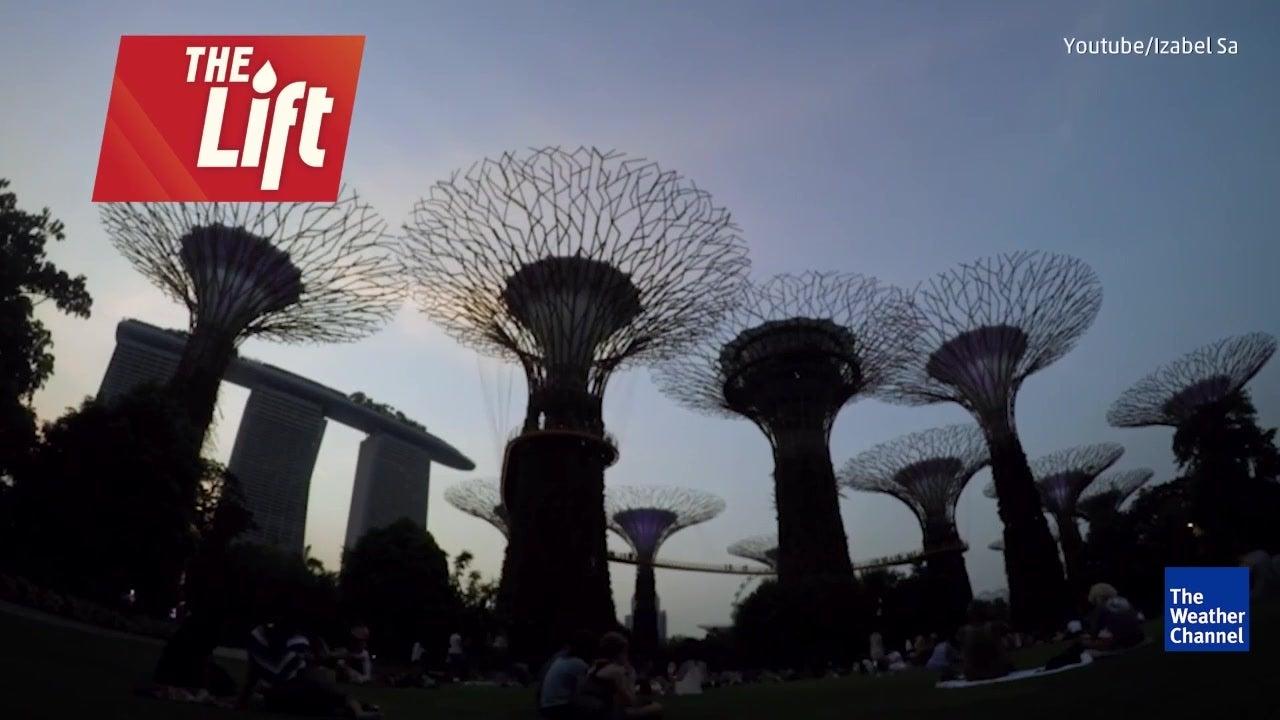 Singapore's Supertree Grove is Stunning Sight