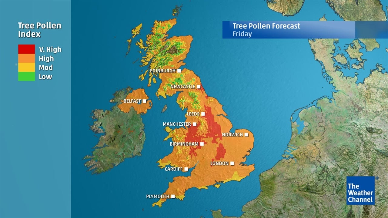 Where and when will sufferers be affected by increasing levels of tree pollen?