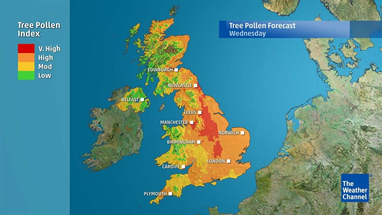 Tree Pollen: Where will be worst-affected this week?