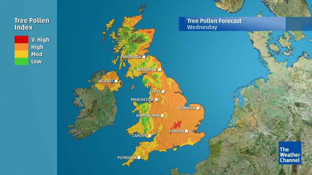 Tree pollen: Levels increasing in next few days