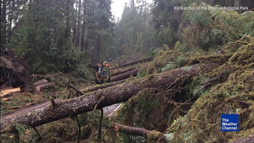 Mystery Winds Break Trees in Washington State