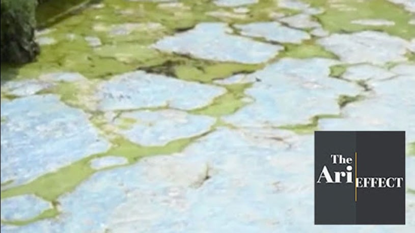 Fed Up Floridians Speak Out Against Algae Problem