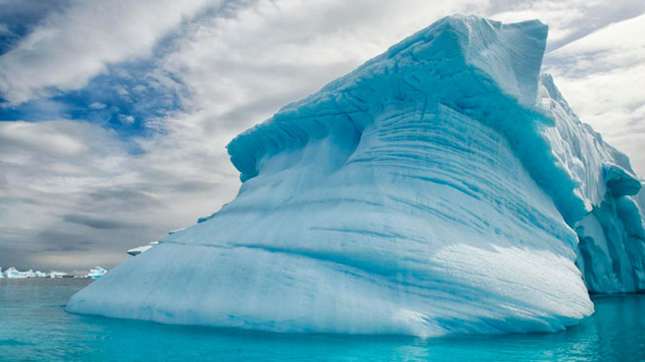 Antarctica Was Once a Forest