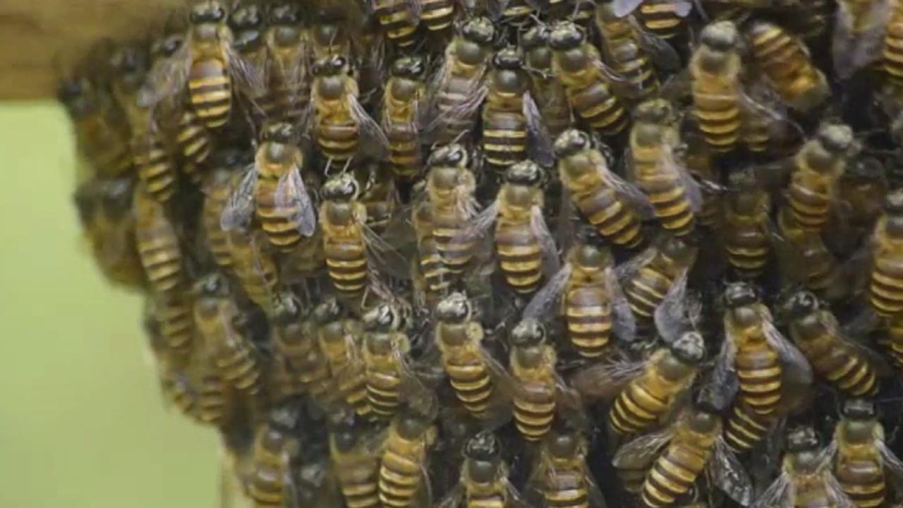 Bienen haben ungeahnte Fähigkeiten