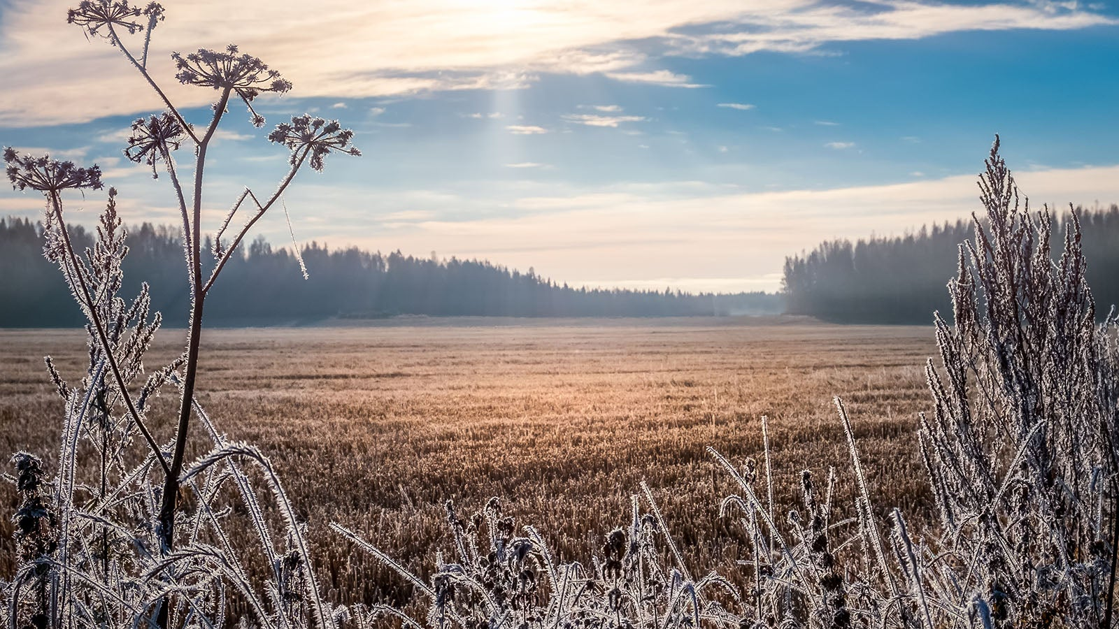 Frostig, aber freundlich: Sonntag bringt Sonne und lokal Dauerfrost