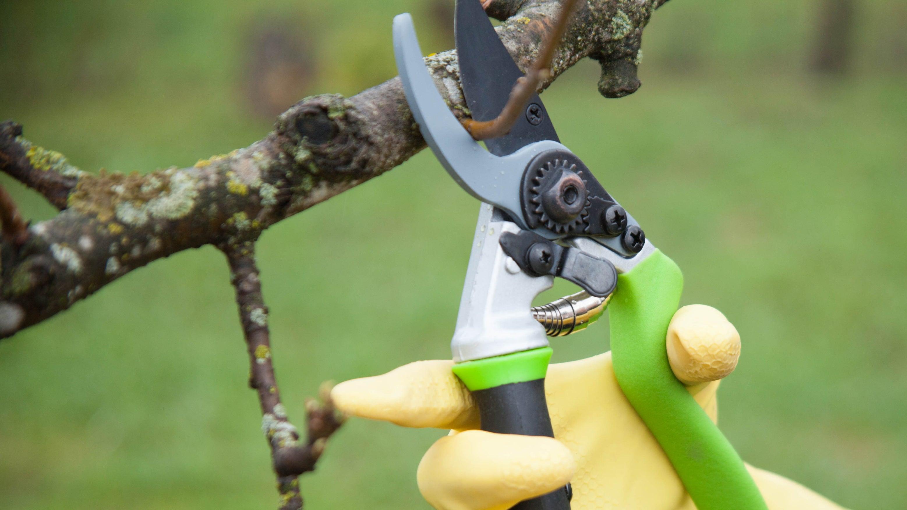 Welche Pflanzen Hobby-Gärtner jetzt nicht schneiden  sollten