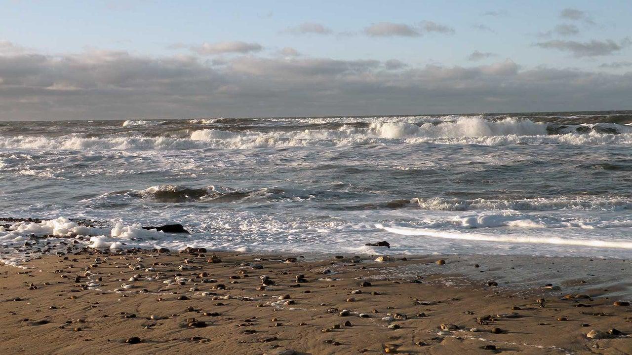 20.000 tote Vögel an Nordseestrand angespült - es gibt einen Verdacht