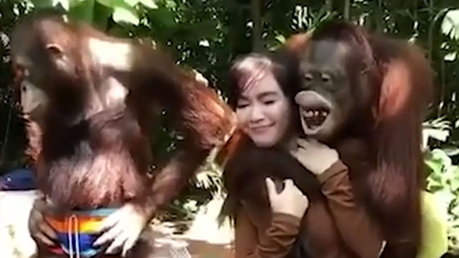 Touristin posiert mit Affen - plötzlich greift das Tier an die Brust