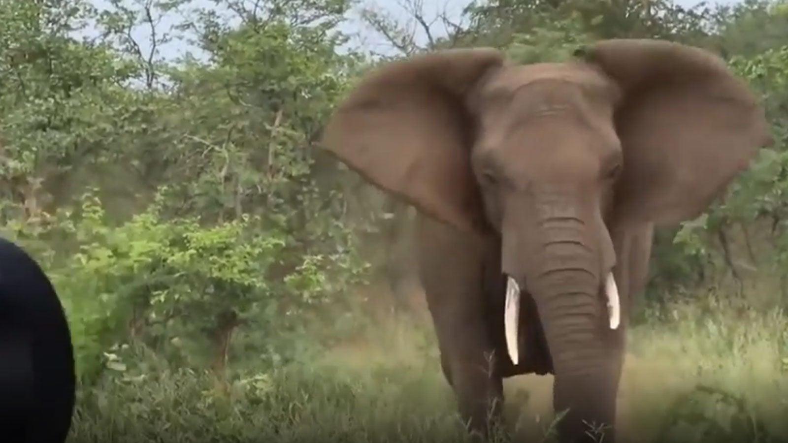 Safari: Touristen treffen auf Elefanten – dann werden die Tiere wütend