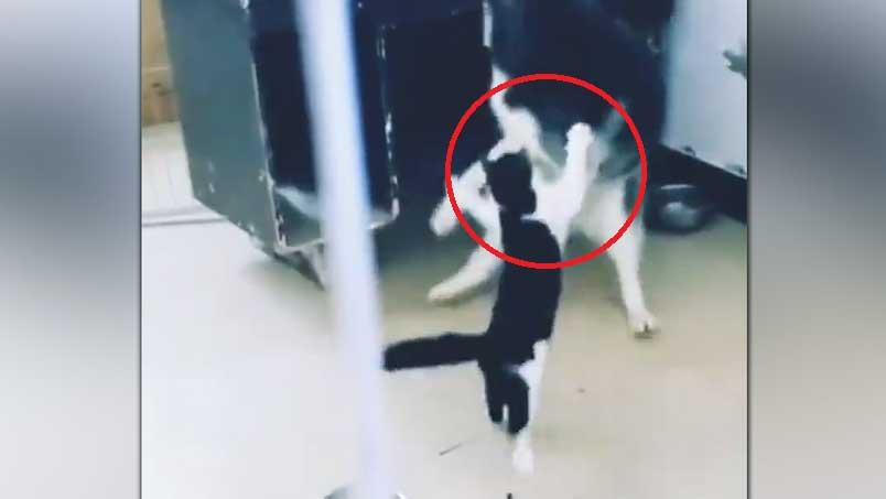 Hund will Katze vertreiben - doch die zeigt ihm, wer der Boss ist