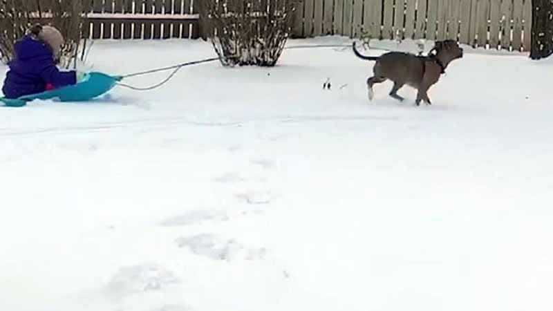 Hund und Mädchen spielen im Schnee- doch der Spaß endet plötzlich