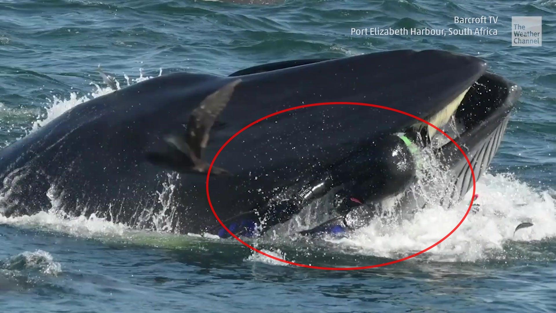 Deutscher Taucher wird beinahe von Wal verschluck