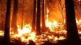 Zerstörerische Naturgewalt: So entsteht ein Waldbrand