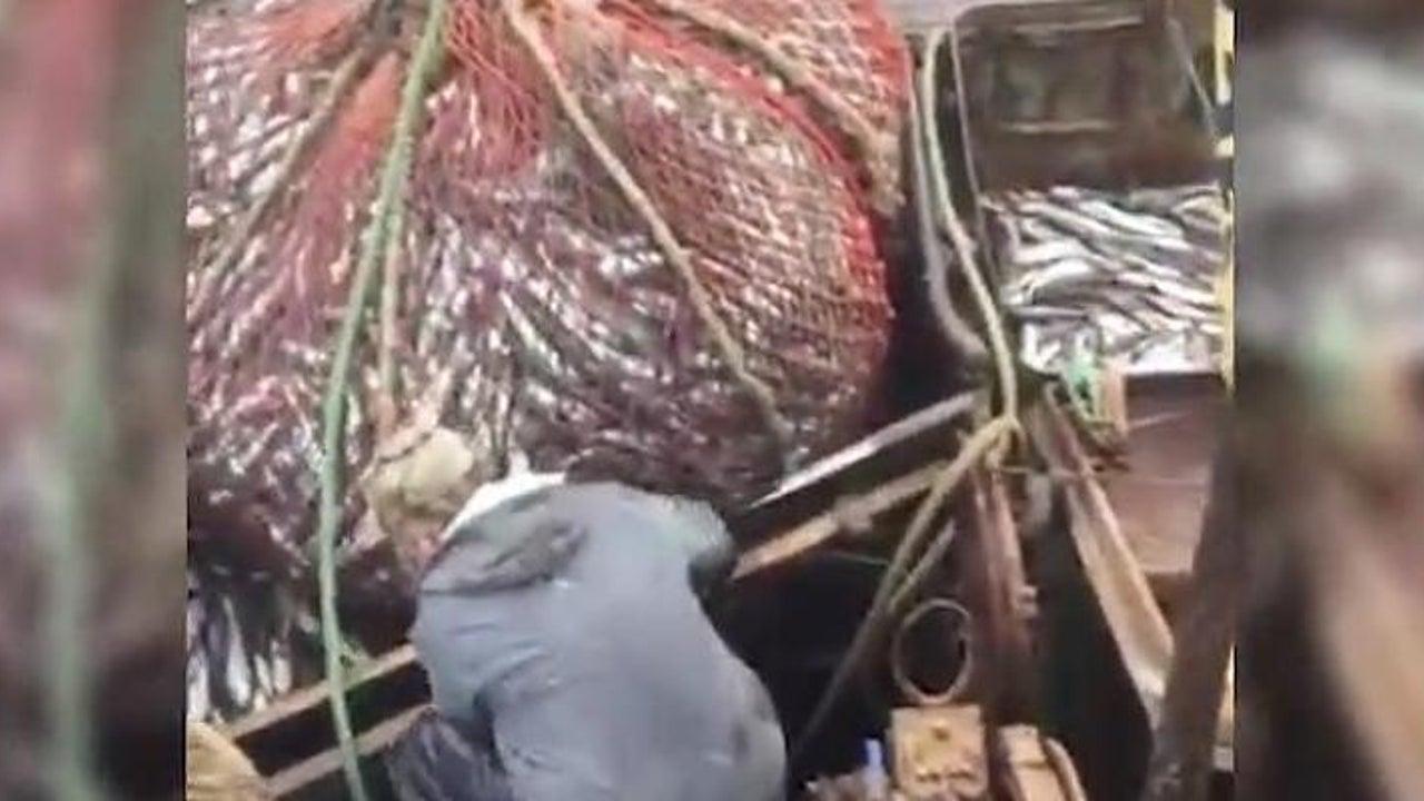 Fischer machen Fang - der ist anders als gedacht