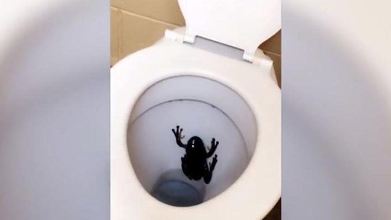 Als Frau in australische Toilette blickt, bekommt sie den Schreck ihres Lebens