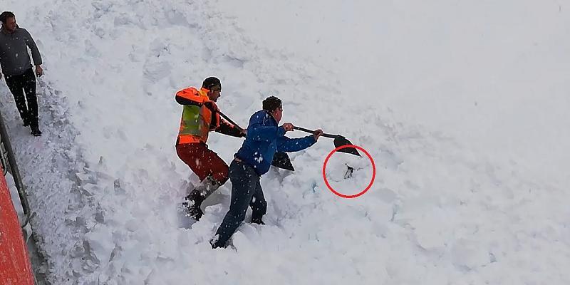 Österreich: Gämse steckt in Schnee fest - Retter schaufeln sie frei