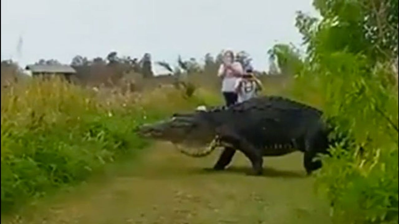 Gator Rules the Nature Reserve