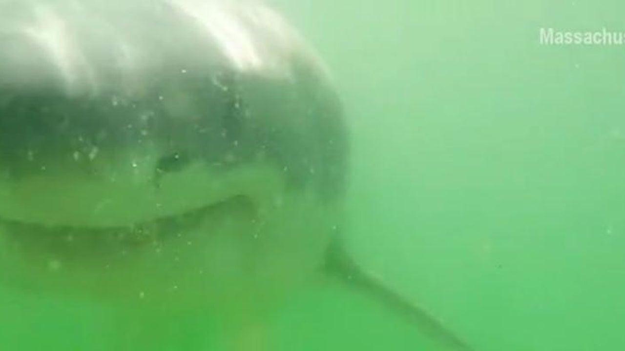 Wissenschaftler will Hai filmen - der findet das zum Anbeißen