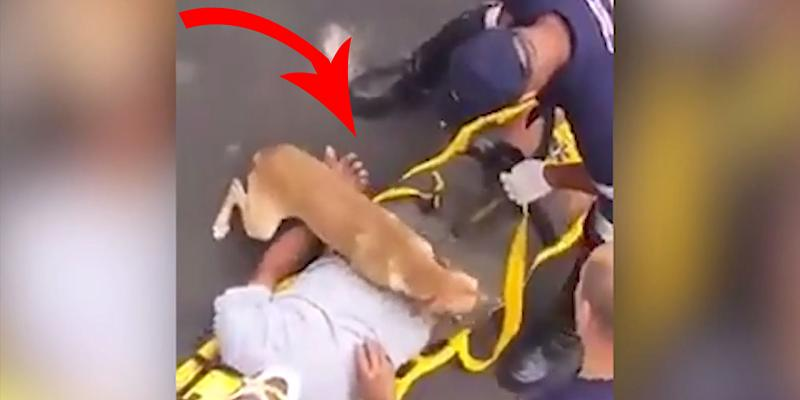Nach Unfall: Hund zeigt, warum er der beste Freund des Menschen ist