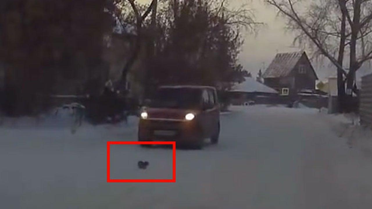 Kätzchen irrt durch sibirische Kälte