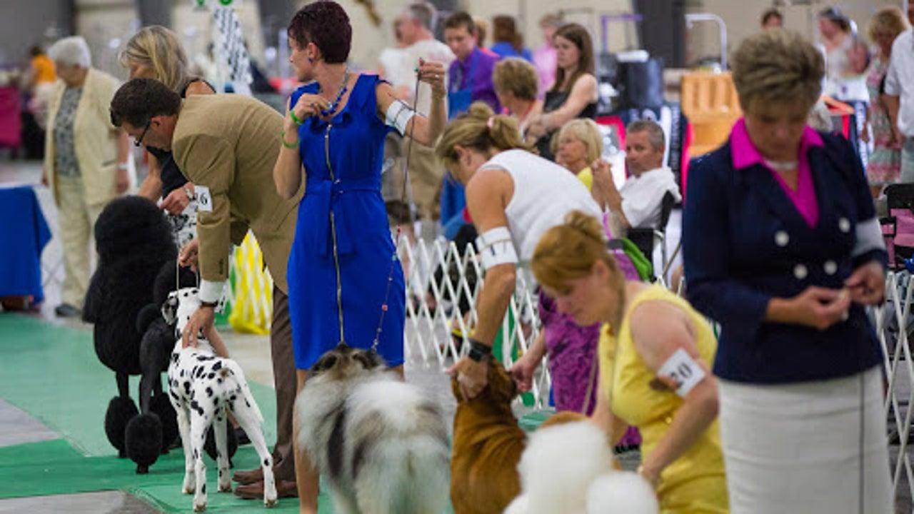 Drama vor Wettbewerb: Kühlung fällt aus - 14 Hunde sterben