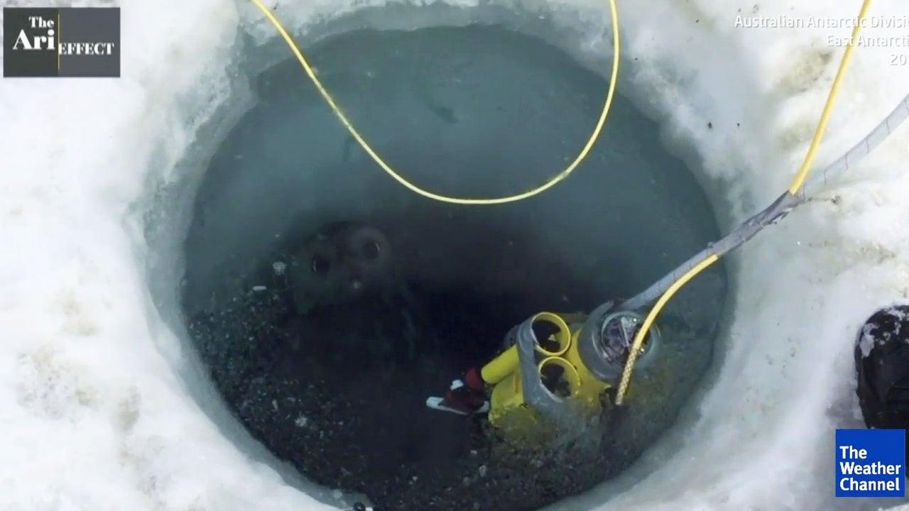 So bunt geht es unter der Antarktis zu