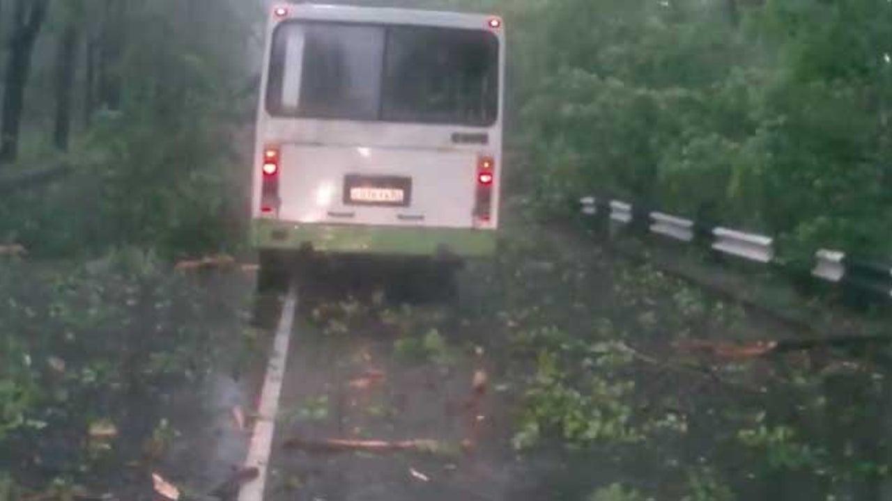 Baum stürzt um - Dieser Autofahrer hat riesiges Glück!