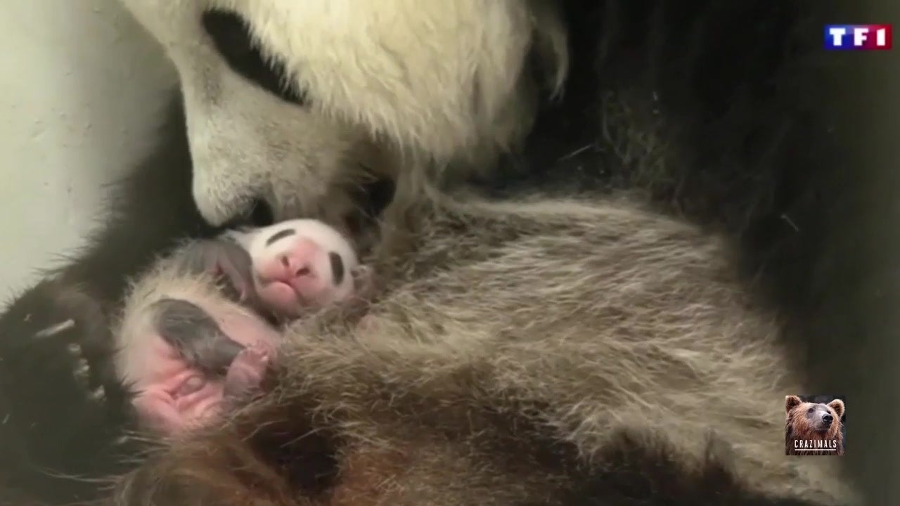 So klein! Hao Hao ist ganz verliebt ins Panda-Baby
