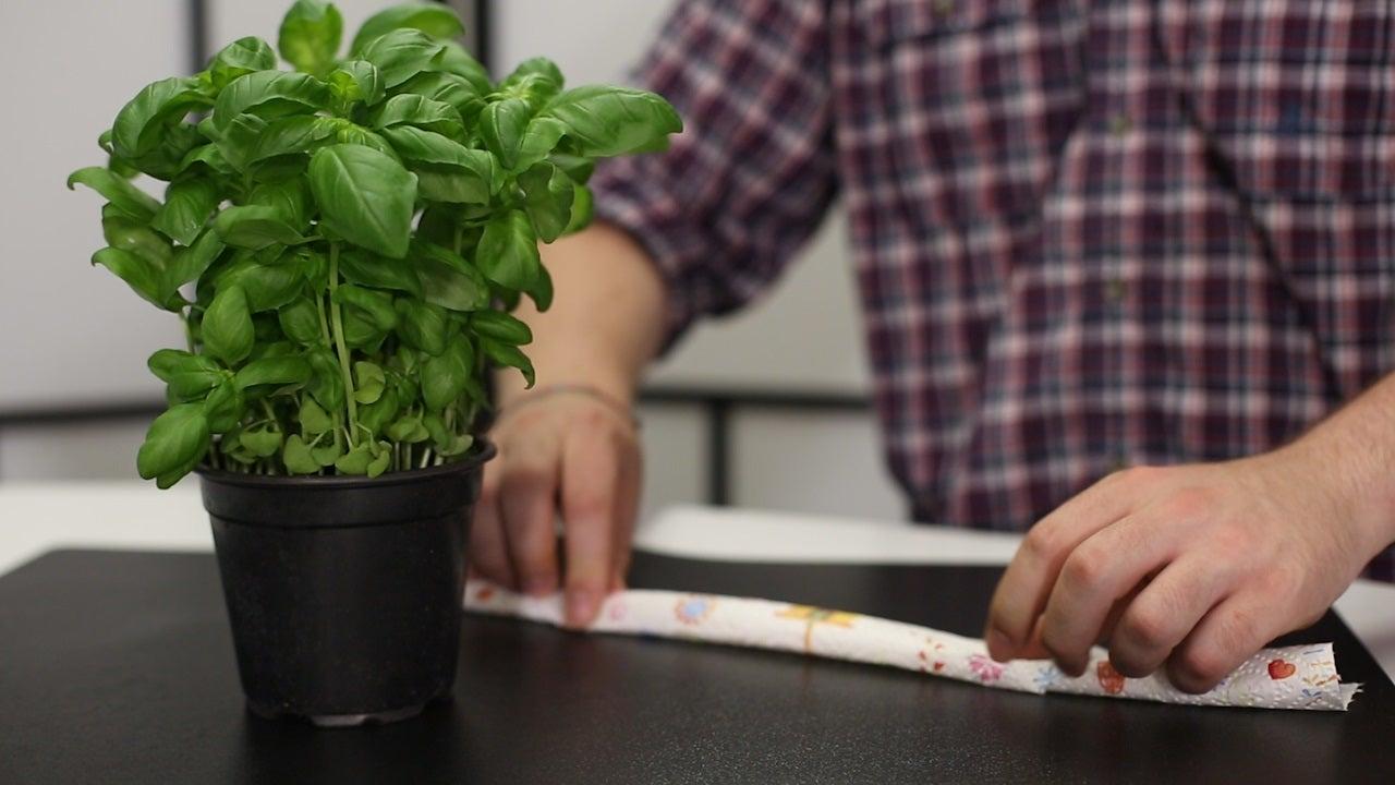 So gießen sich Ihre Pflanzen ganz von alleine