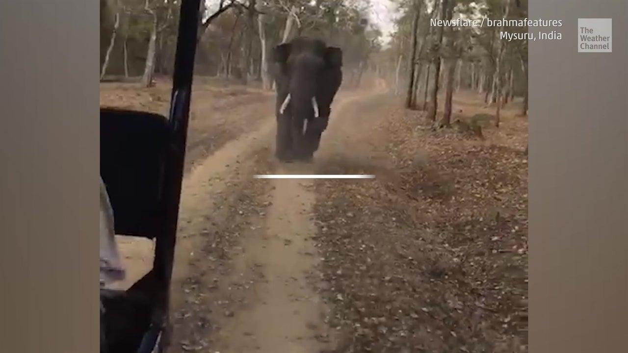 Este elefante furioso no es lo que parece