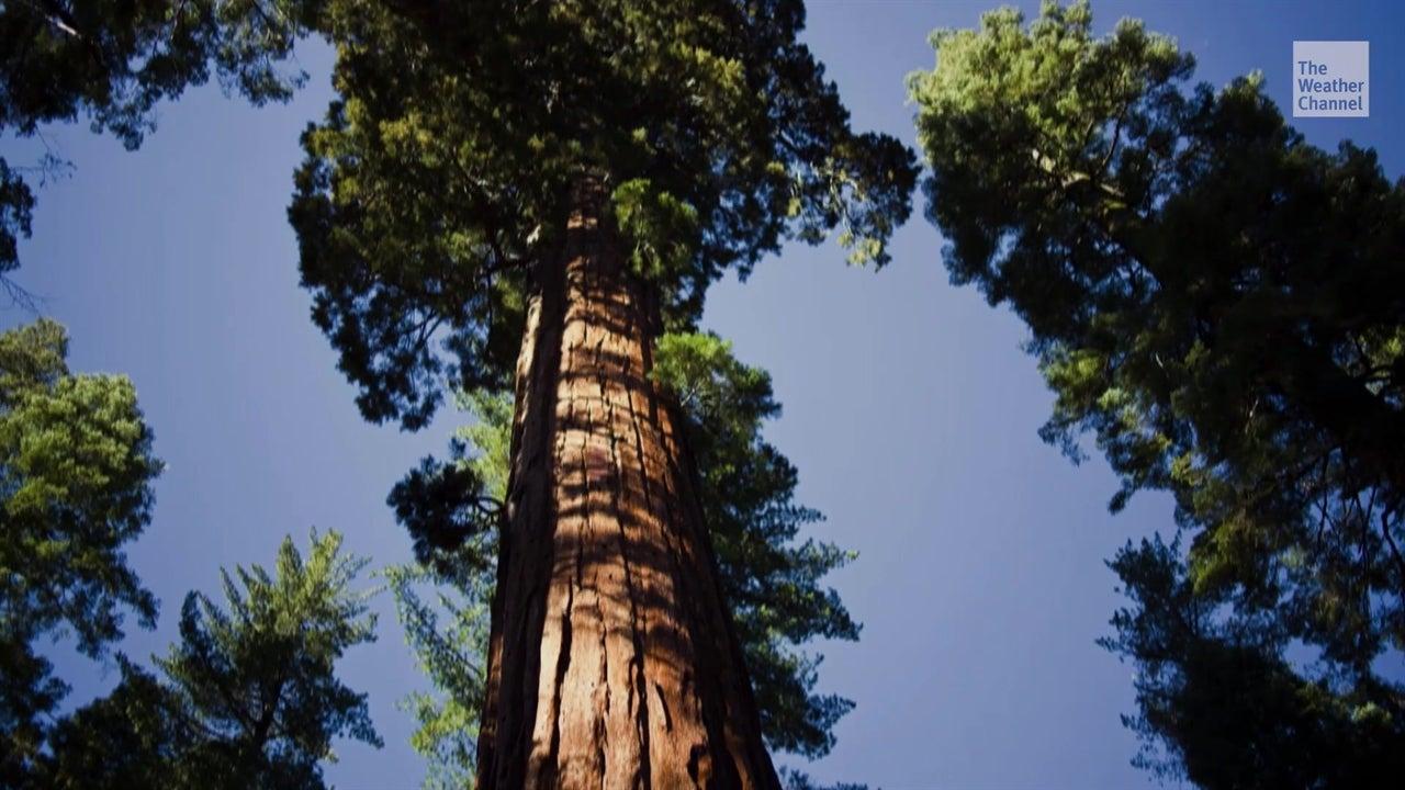 Controversia por torre en Sequoia National Park