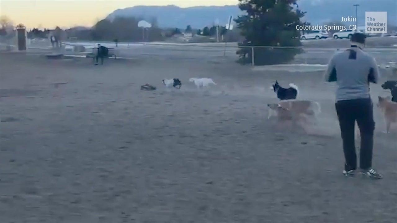 Este parque de perros se volvió u centro de carreras