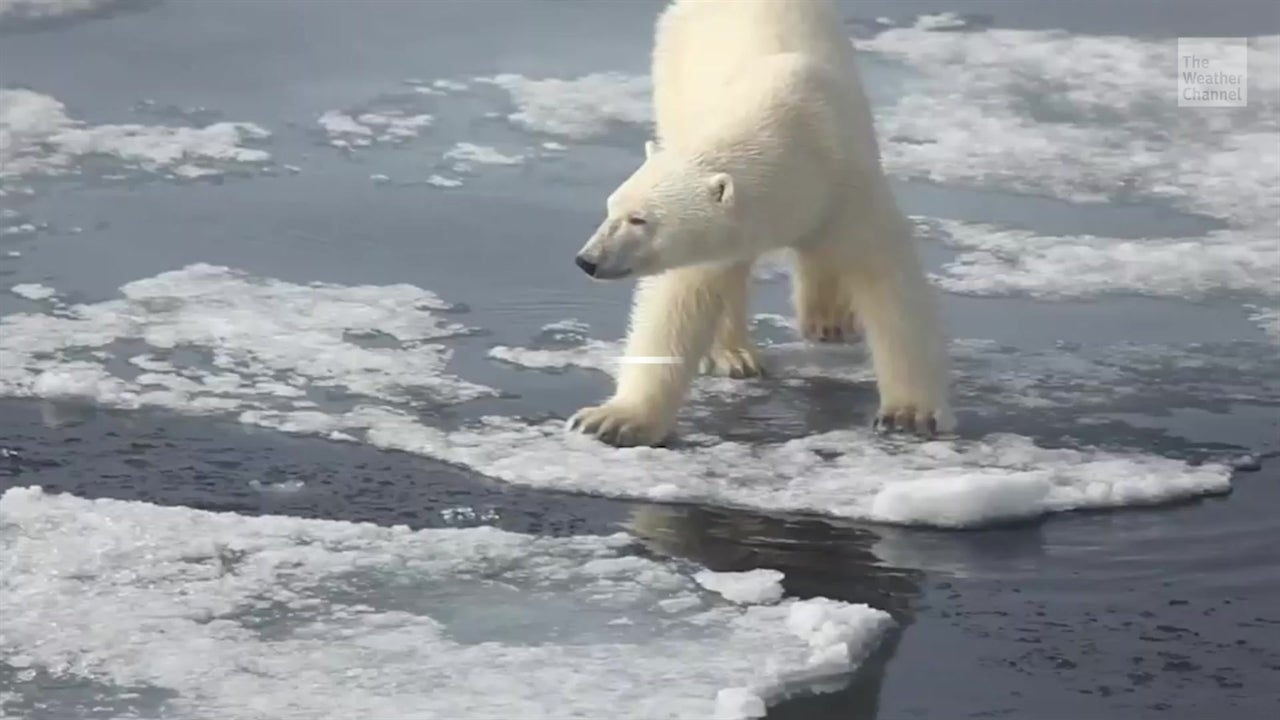 ¿Esto podría limitar el calentamiento global?
