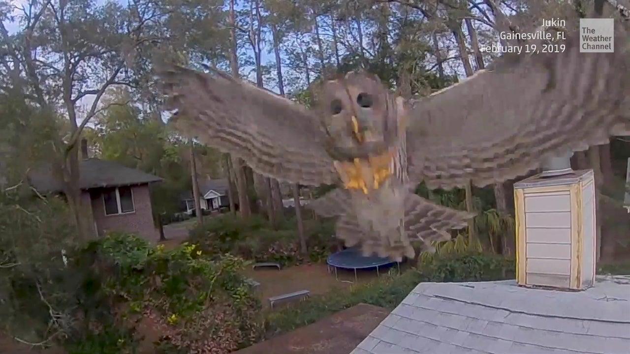 Dron atacado por una lechuza