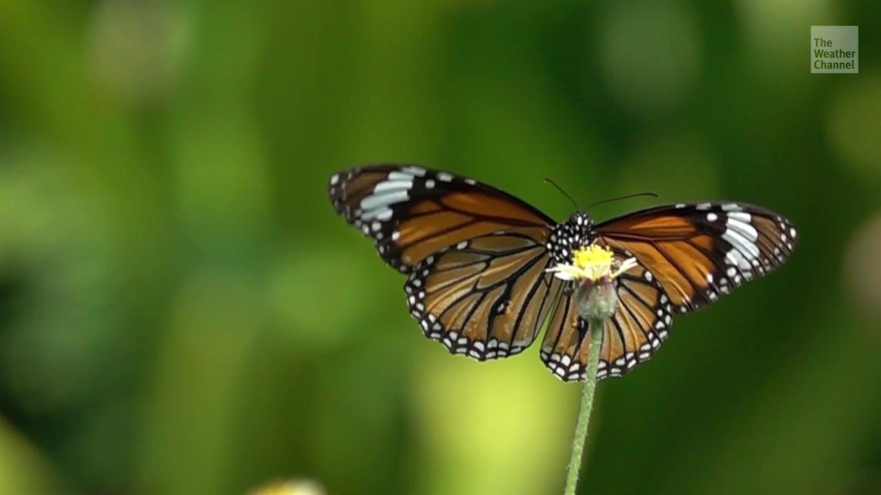 Insectos en vías de extinción amenazan ecosistemas