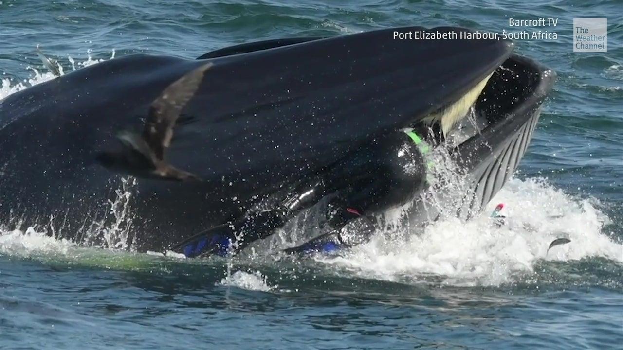Atrapado por una ballena