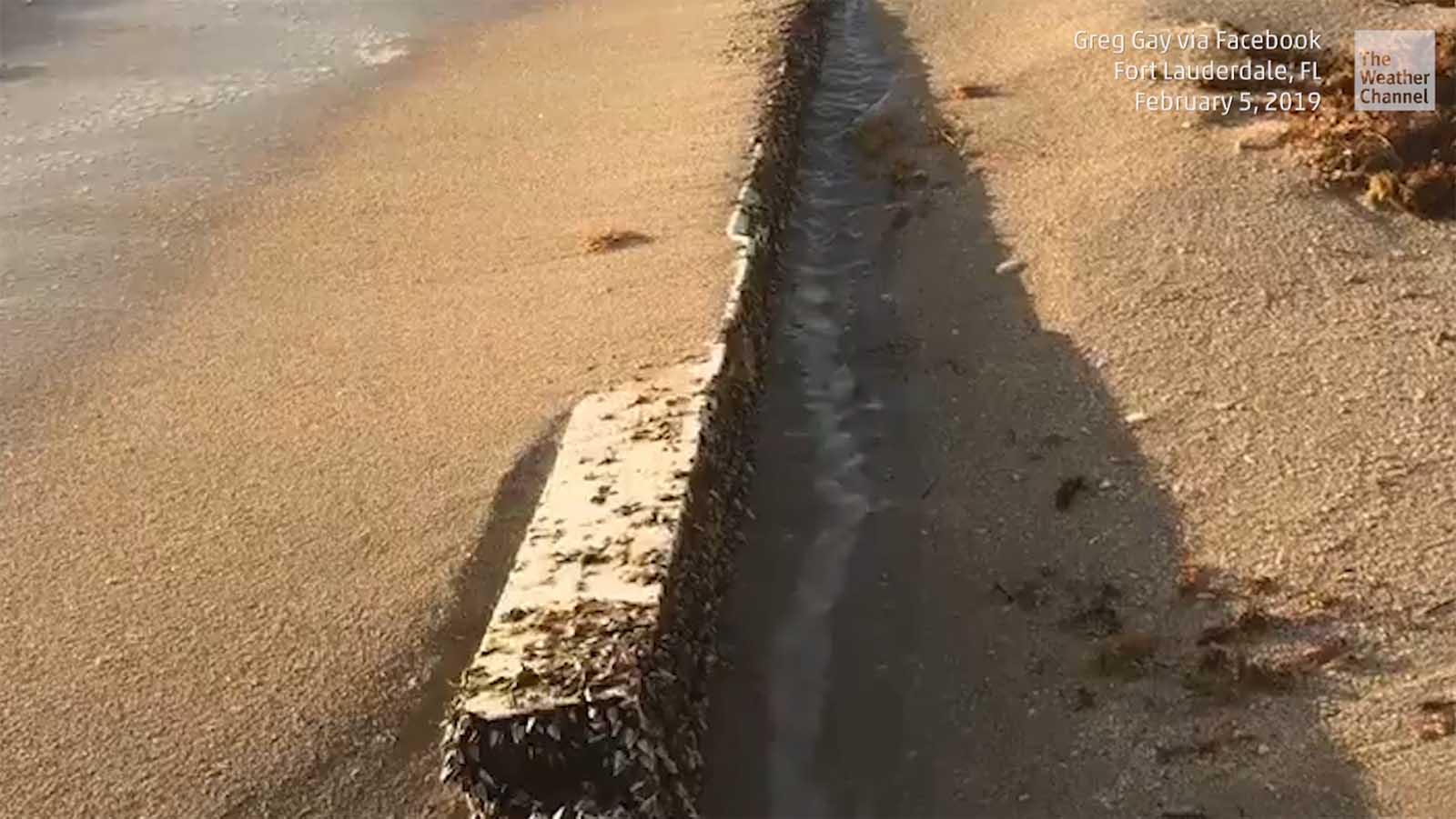 Mystisch: An Floridas Küste taucht ungewöhnliches Strandgut auf